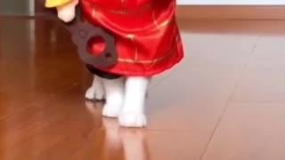 Cats Fashion Week
