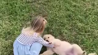 Cute baby dogs video compilation