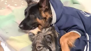 Adorable puppy isolation cuddles will brighten your day
