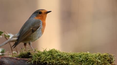 Little bird 24