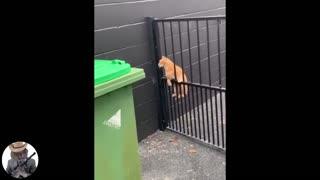 Funny animal video compilations