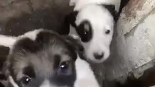 puppies, puppy, dog