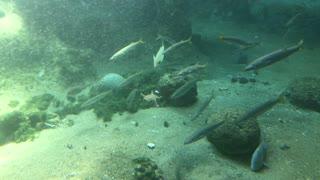 Marine life is beautiful