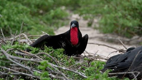beautiful birds singing (11)