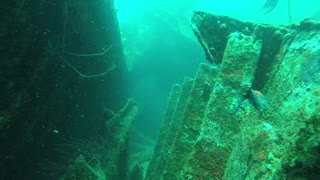 Incredible ShipWreck Dive