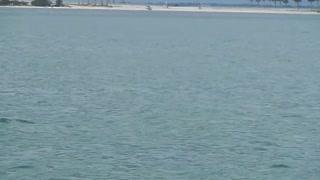 Caladesi Island Dolphin