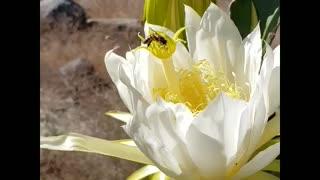 Bee's are amazing