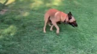 Dog fight with bird