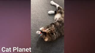 Funny cute cats compilation 2021