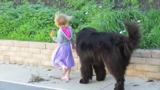 Dogs PROTECT Children and dogs are best friends, nanny dogs
