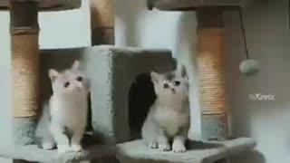 Cute cats shaking their heads