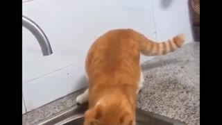 Hilarious Cat Moments, Must Watch!