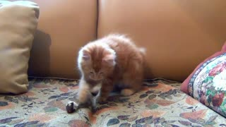This little cat is playing with her mouse