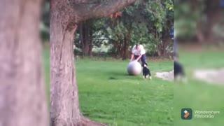Funny animals dog challenge