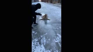 A dog that can't walk on ice