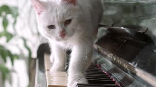 White Cat Play