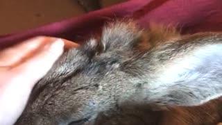 Red blanket bunny pet