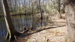 Swamp Kayaking