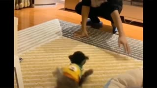 Dog Fight - Funny Dog Fight Video make funny