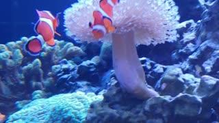 Nemo video