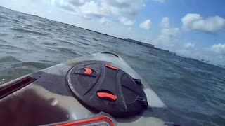 Saint Joseph Sound Large Stingray