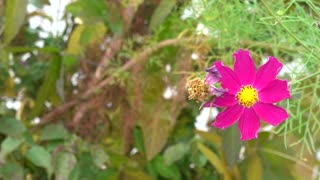 Beautiful flowers in autumn 4