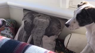 Amazing animal friendships: Rescue pigeon and puppy