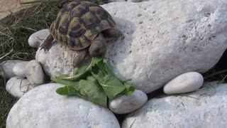 Turtle search