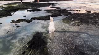 A Dog trying to save a fish's life