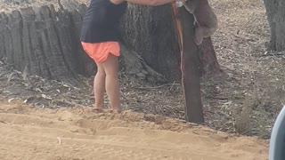 Helping to Keep a Koala Cool
