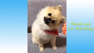 Cute Pets - Funny compilation 2021