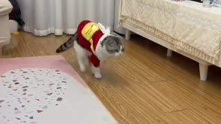 sweet funny cat