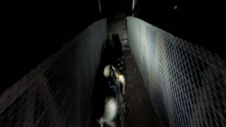 Running Sled Dogs January 29, 2021