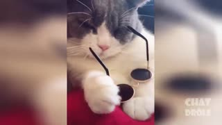 These cats are insane