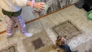 The dog tries to catch a tennis ball