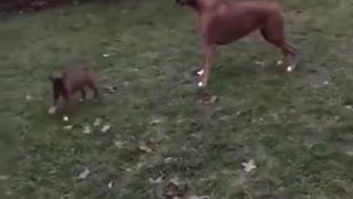 Puppy meeting his big sister!