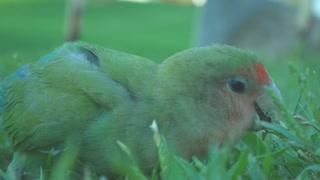 Beautiful parrot *