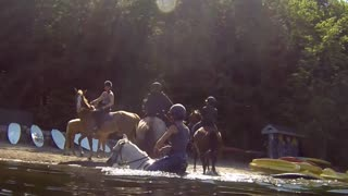 Horse Swimming with Rider