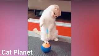 Compilation Funny Cats 2021