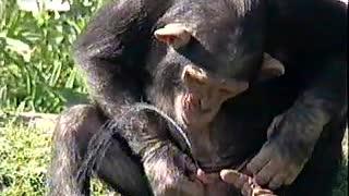 Monkey survive