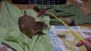 with gopher Belyashik play homemade toys