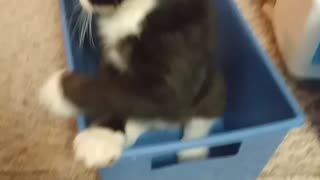 Cute cat plays with new toy
