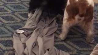 Puppies playing in bed sheets so cute!