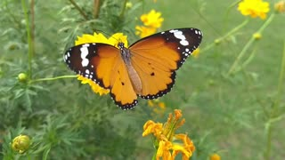 Beautiful colors butterfly