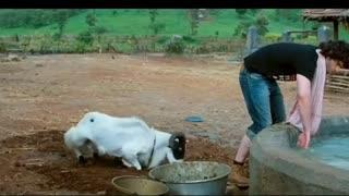 Bollywood movie comedy scene 🤣