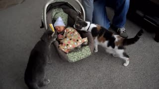 Cat meets baby for the first time | Baby enjoy time with the cat