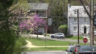 DC Celebrates Spring With Petal Porch Parade