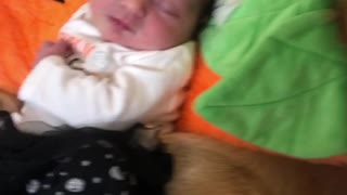 Baby and Golden Retriever Snuggling in Pumpkin Outfits