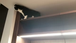 cat gets stuck