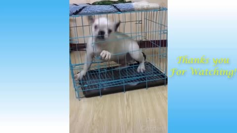cute ´n funny animals compilation